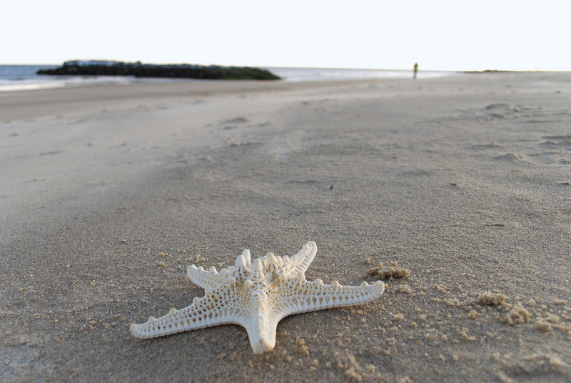 A close-up of a starfish on the beach in Avon By the Sea along the Jersey Shore.