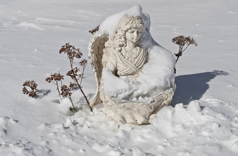 """""""Snow Angel""""<br /> <br /> An angel statue in the snow with dry Winter plants."""