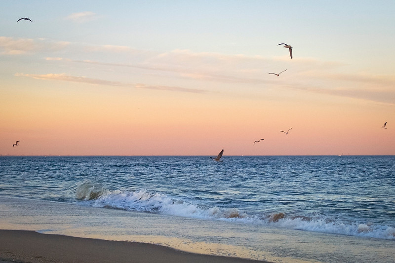 """""""Freedom of the Sea""""<br /> Seagulls in flight over the surf at sunset on Sandy Hook, along the Jersey shore."""
