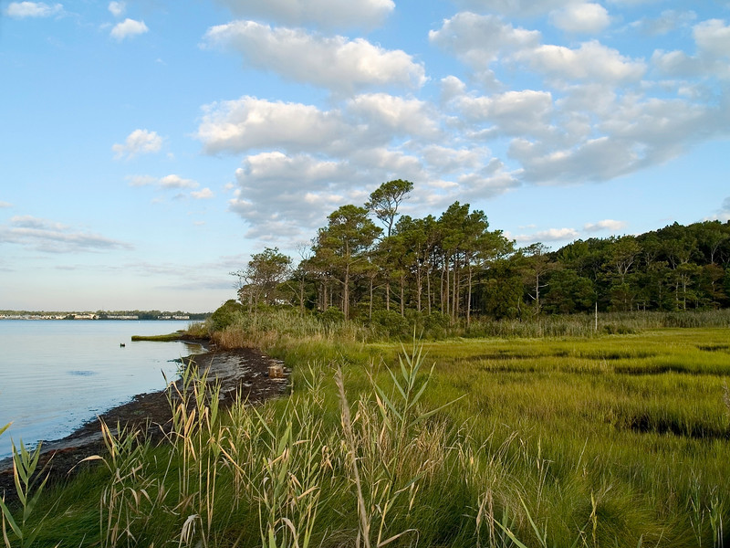 """""""Wetlands""""<br /> A view of the wetlands near Ocean City in Maryland."""