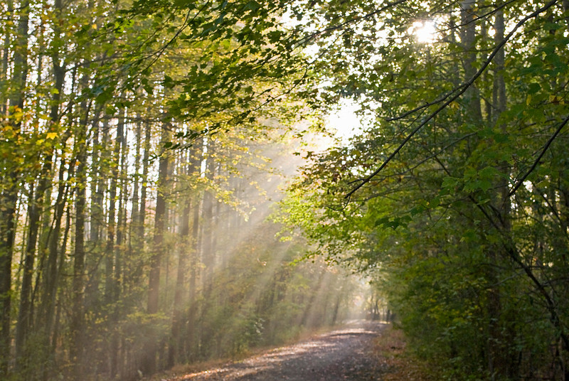 """""""Forest Light""""<br /> Beams of light shining down through a late Summer woods."""
