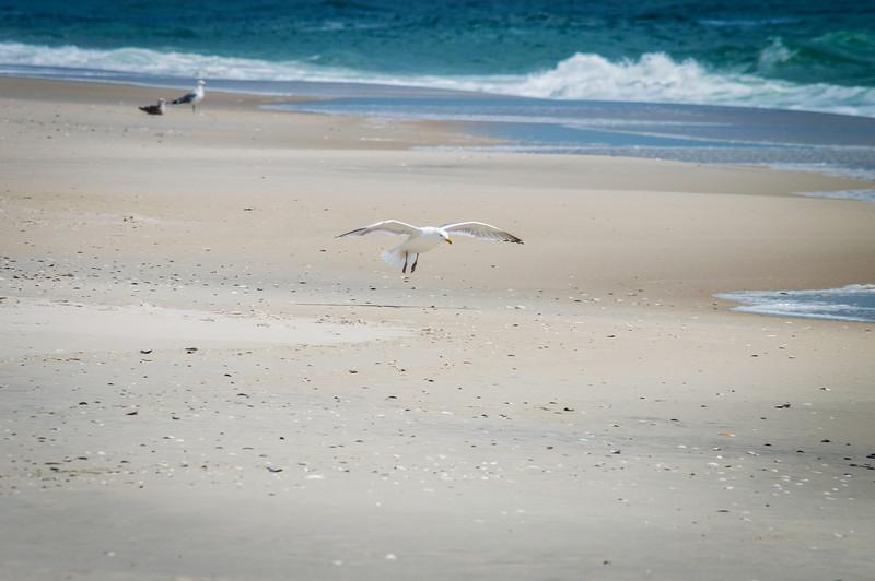 Flight From Beach