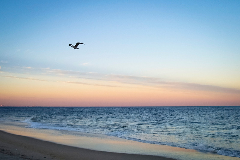 """""""Peaceful Beach at Dusk""""<br /> A seagull at sunset over the beach on Sandy Hook, along the Jersey shore."""