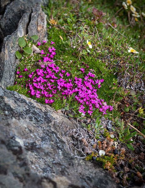 Petite Pink Wildflowers