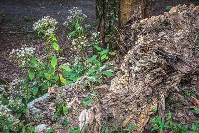 Decaying Stump