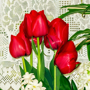 Tulips In Home