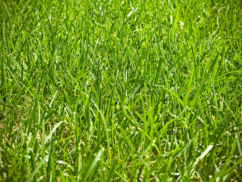 """Green Grass""<br /> A green grass background photo."