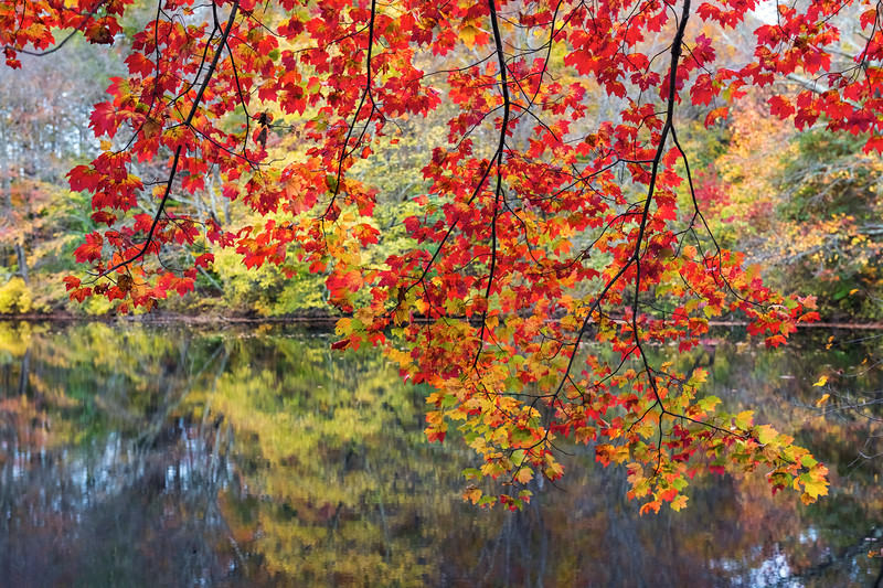 Leafs on the Lake