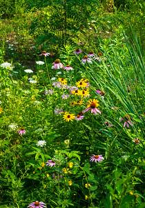 SummerWildflowers
