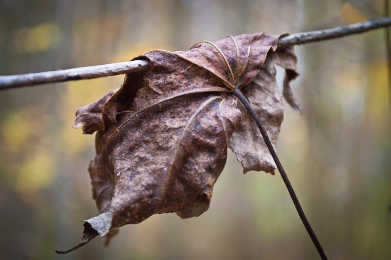 A Dry Leaf