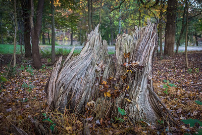 Dead Old Stump