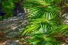 Fan Plants
