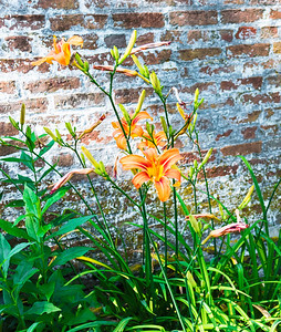 Tiger Lillies and Wall