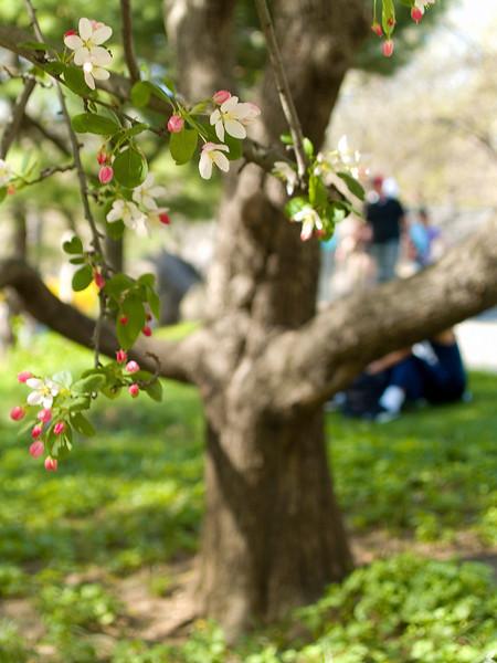"""""""Spring Day"""""""