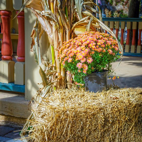 Autumn Mum Planter