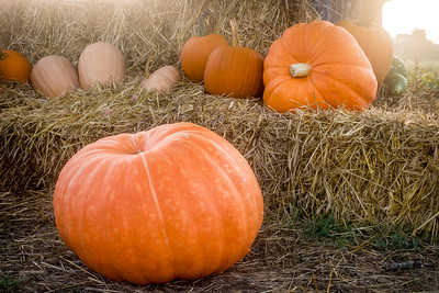 Pumpkins on Haystack