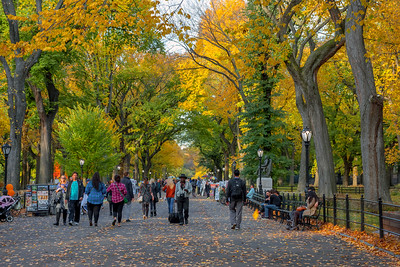 Fall Day on the Mall