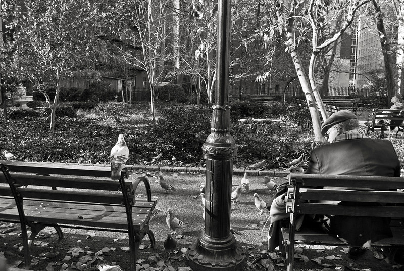 """Feeding the Pigeons"" A man in a park on the East side of Manhattan feeding the pigeons."