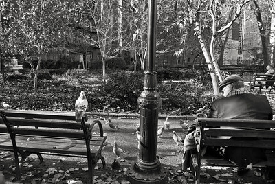 """""""Feeding the Pigeons"""" A man in a park on the East side of Manhattan feeding the pigeons."""