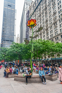 The Rose of Zucotti Park