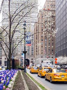 Spring Park Avenue