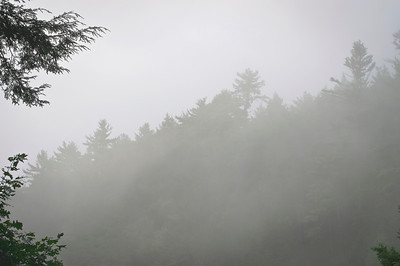 """Misty Woods Background""  A foggy morning along this hillside in the Pocono Mountains of pennsylvania."