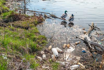 Garbage Along Shoreline