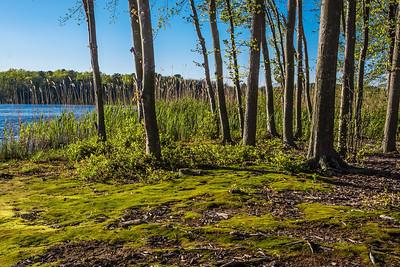 Moss on Shoreline