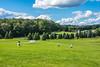 Quiet Woodstock Field