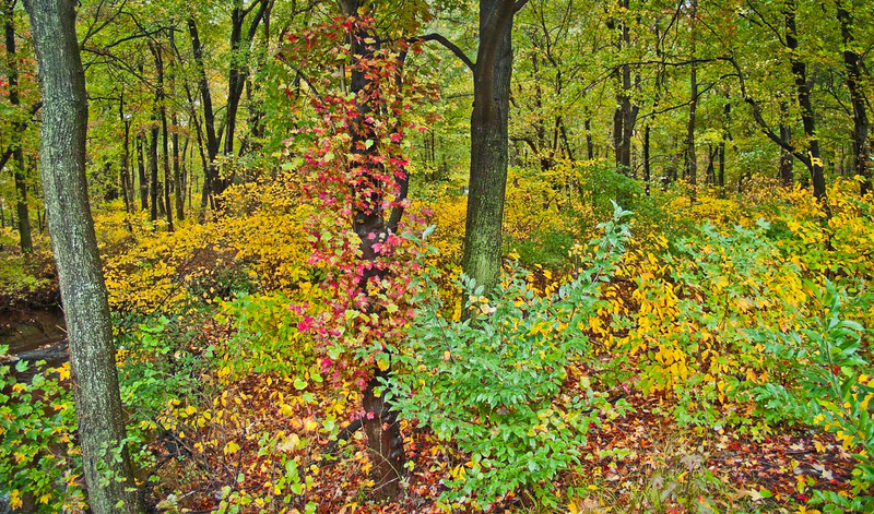 Autumn Woods Panorama