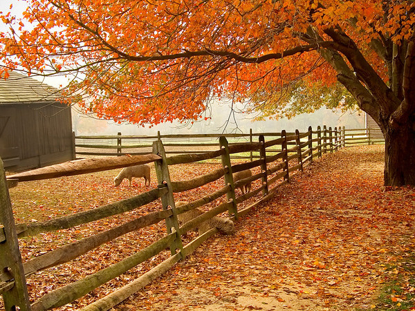 """Fall Barnyard"" A beautiful Autumn scene at the historic Longstreet Farm in Holmdel, New Jersey."