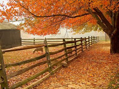 """Fall Barnyard"" A beautiful Autumn scene at the historic Longstreet Farm in Holmdel, New Jersey."