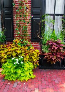 Plants on the Sidewalk