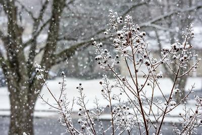 Fresh Neighborhood Snow