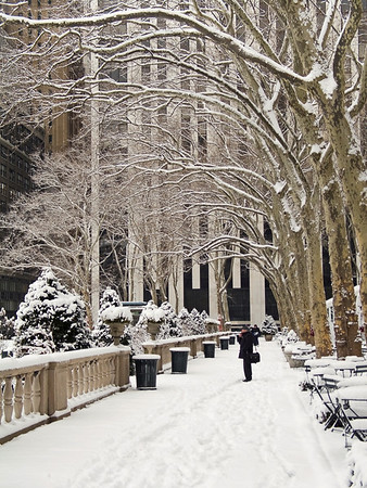 """""""Bryant Park Snow"""" 2005  Snow covered overhanging branches of Sycamore trees in Bryant Park in Manhattan after a fresh snowfall."""