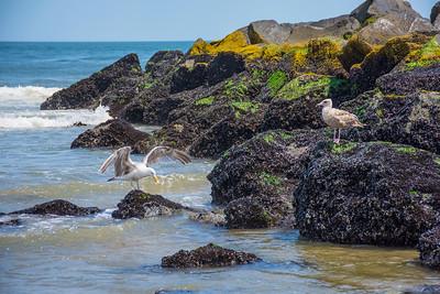Seagulls on Jetty