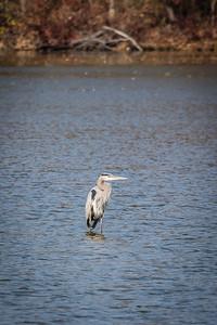Heron Smithville Park