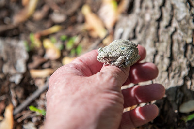 Toad on Thumb