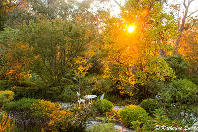Autumn Sunrise, Baby Brigadoon