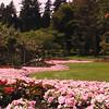 Floral border Stanley Park