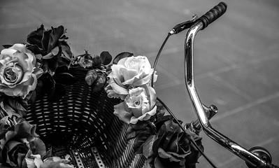 L'important c'est la rose - Firenze