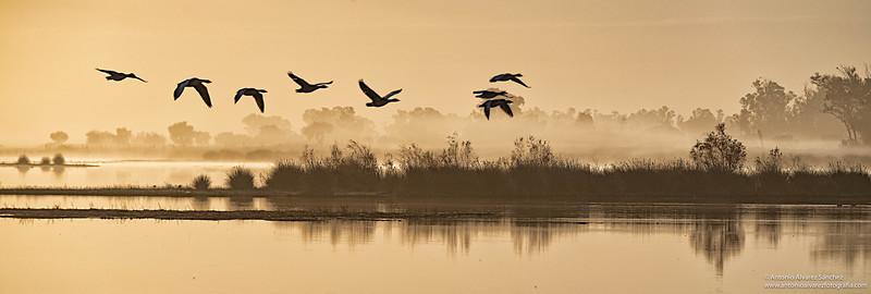 Alba en las marismas II /Dawn in the marshes