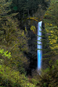 Latourell Falls with Tree From Trailhead Parking Lot