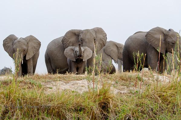 Elephants and baby