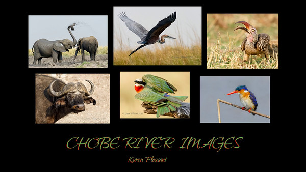 Chobe River Slide Show