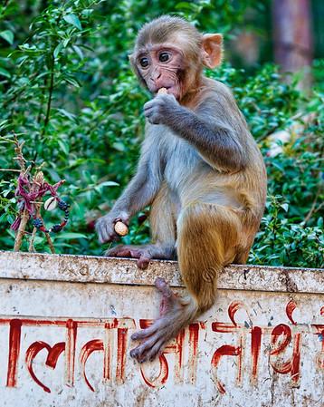 Galwar Bagh (Monkey Palace)