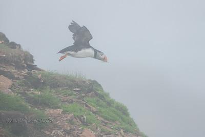 Flying in fog