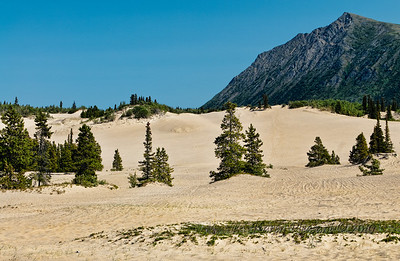 World's smallest desert, Carcross Desert