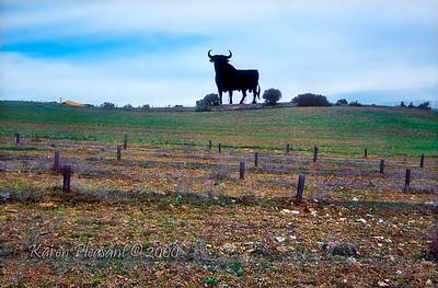 Roadside bull
