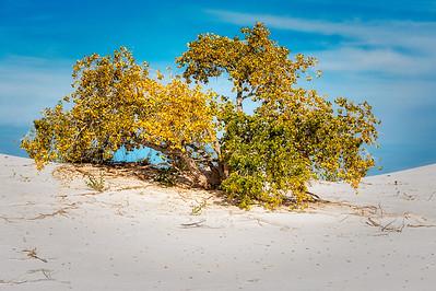 White Sands Nat'l Monument